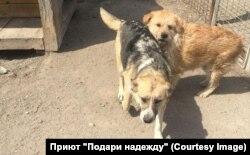 """Собаки в приюте """"Остров спасения"""""""