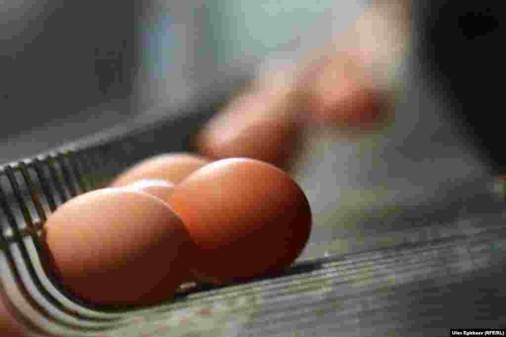 Күнүнө 100 тооктун 85-90у жумуртка берет. Суукта бул көрсөткүч 40 пайызга чейин түшүп кетиши ыктымал.