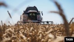 Пшеничное поле, Краснодарский край