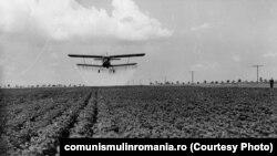 Agricultură în Bărăgan. În 1989, agricultura a întrecut cele mai fantastice așteptări raportând recolte fictive în timp ce populația flămânzea. Sursa: comunismulinromania.ro (MNIR)