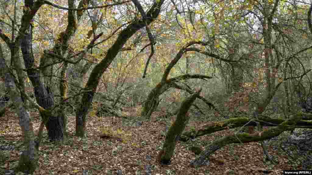 У лісі над Качинською долиною