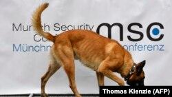 Иллюстративное фото. Полицейская собака возле отеля Bayerischer Hof, места проведения 54-й Мюнхенской конференции по безопасности, в Мюнхене, 16 февраля 2018 года