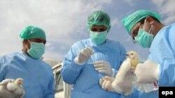 Ученые говорят, что вакцина не опасна для здоровья человека