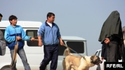 It urşuna alnyp barylýan köpek, Aşgabat, 2010.