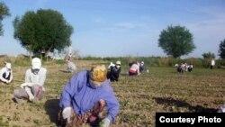 Президент Каримов кўкрагига қаҳрамонлик нишонини тақадиган қорақалпоқ фермерининг юзлаб гектар сувга сероб ерлари бор.