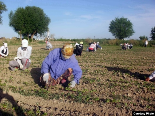Human rights organizations have long charged Uzbek officials with using schoolchildren to harvest cotton.