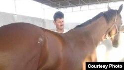 Лошадь и рабочий в конюшне Мехди Табыная.