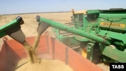 Для увеличения экспорта ячменя и пшеницы необходимы госсубсидии, полагают в Российском зерновом союзе