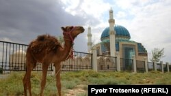 Верблюжонок на фоне мечети в городе Туркестане.