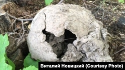 Один из черепов, найденный в Царском Селе