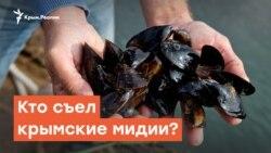 Кто съел крымские мидии? | Дневное ток-шоу