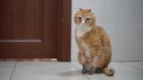 котик протез