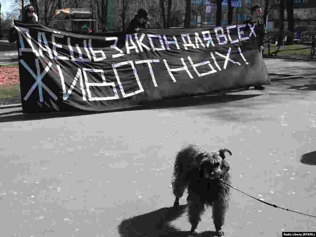 Организаторы митинга считают, что этот законопроект требует существенной доработки...