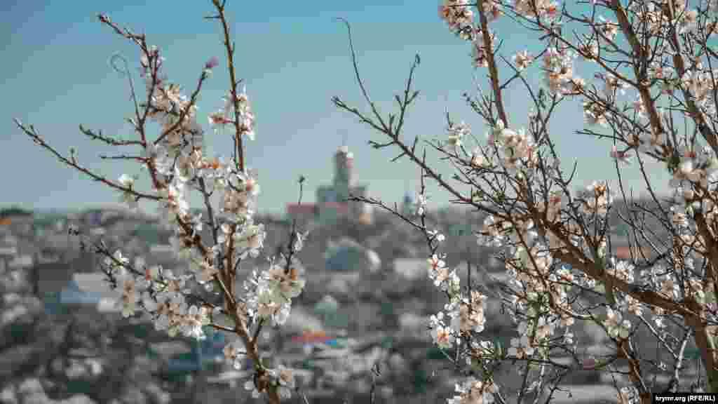 Гілки квітучого мигдалю на вулиці Ватутіна трохи заступають вигляд на сусідню Воронцовську гору. На ній видно православну церкву