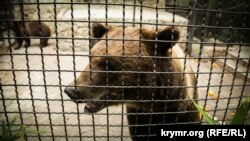 Медведь в парке «Тайган»