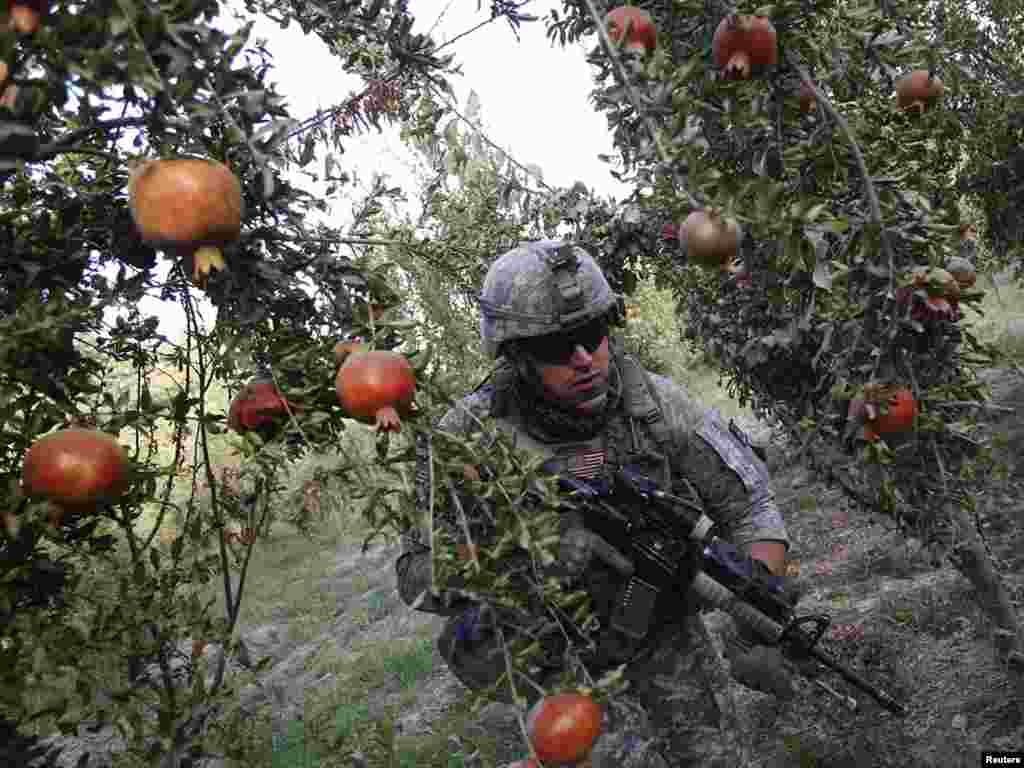 A U.S. soldier patrols in a pomegranate orchard in the Arghandab River valley in Afghanistan's Kandahar Province on September 7. Photo by Oleg Popov for Reuters