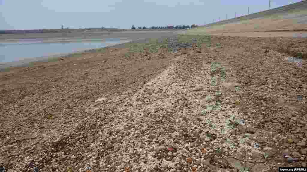 Тепер лише сухі раковини нагадують про колишнє багатство місцевої біосистеми