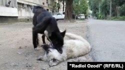 Бездомные собаки на улицах Душанбе