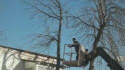 """Ağacları belə """"budamaq"""" olarmı?"""