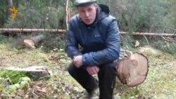 Златоуст. Граждане защищают свой лес