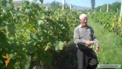 74-ամյա աչաջուրցի խաղողագործը միայնակ 1.5 հա այգի է մշակում