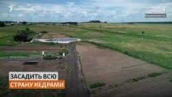 Уроженец Сахалина создал первый в Калининградской области кедровый питомник