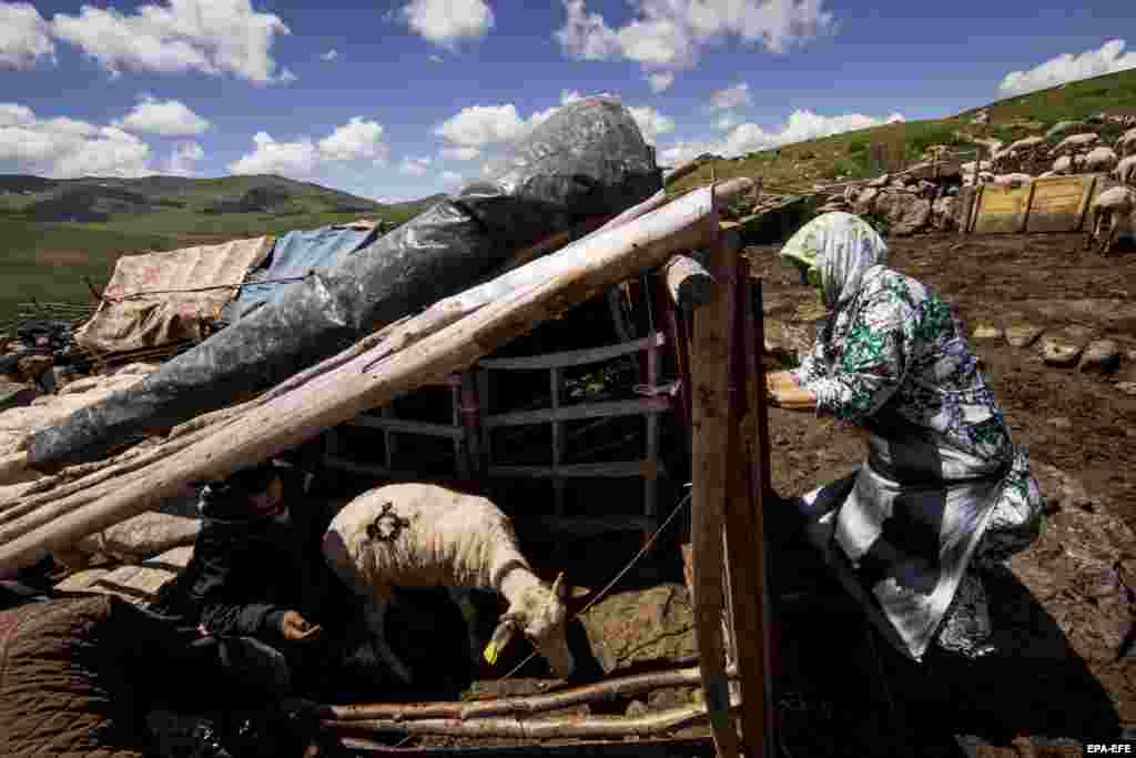 Bajram Balje (left) marks sheep at his hut in the Sharr Mountains.