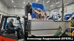 На рыбной фабрике