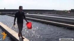 Անդամակցությունը ՄՄ-ին կհանգեցնի ձկնաբուծության ոլորտում աշխատատեղերի կտրուկ կրճատման