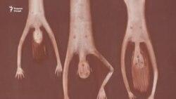 Шок и дрожь по телу. В Душанбе продолжается выставка работ Фарруха Негматзода о жертвах пыток