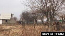 То, что осталось от села Женис после наводнения. 5 декабря 2020 года.