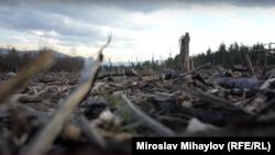 Tăierile ilegale de pădure sunt frecvente în județele din nordul României