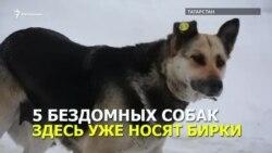 Собаки с клипсами в ушах