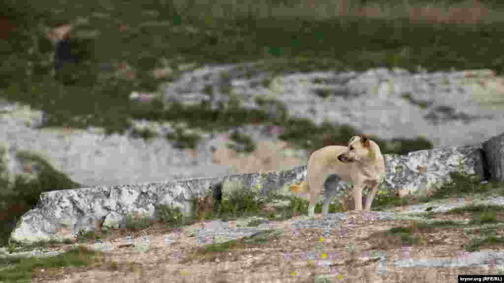 Білий собака біля білих каменів