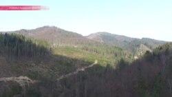Лысые Карпаты: из-за кого исчезает лес в украинских горах?