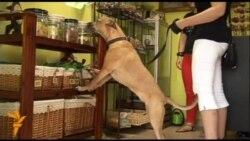 Пекарня з печивом для собак відкрилася в словенському місті Маріборі