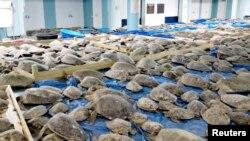 Спасяването на 5000 морски костенурки. Новини като хората