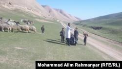 یک پزشک حیوانی در کنار یک رمه گوسفند قرهقل در افغانستان