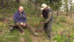 Путин и Шойгу гуляют по тайге