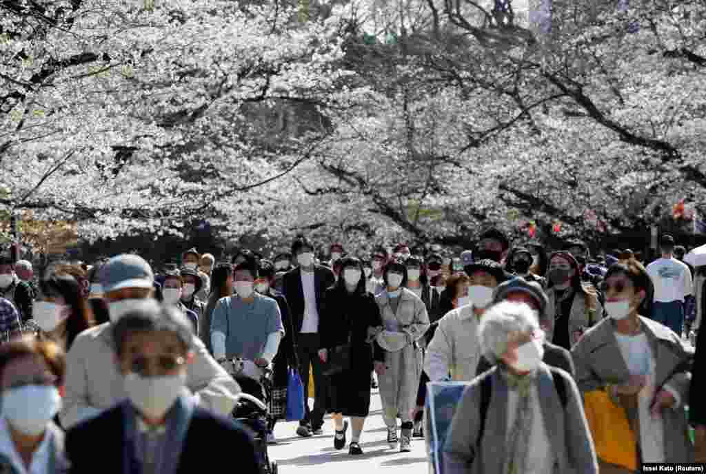 Особенно жесткие ограничения действовали в Токио, где власть настойчиво рекомендовала местным жителям отказаться от пикников в парках во время цветения деревьев