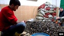 В Турции огромное количество людей занято добычей, приготовлением и продажей мидий