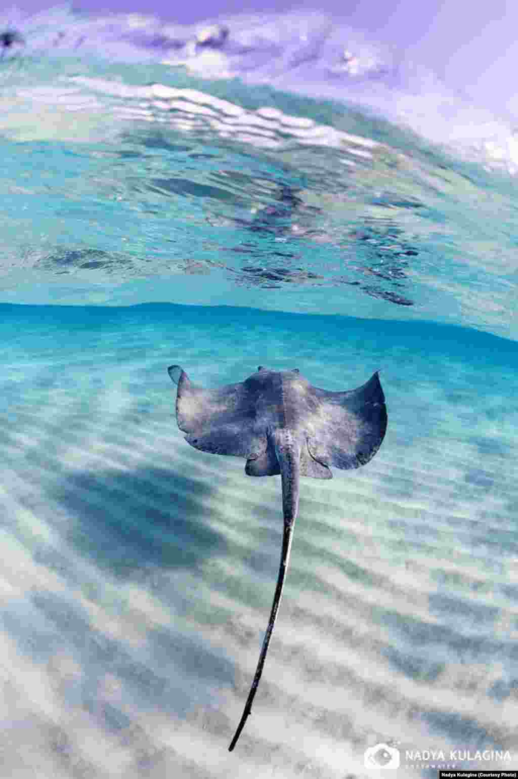 """The first time I took my camera underwater was back in the fall of 2009,"" she says, ""and I have been diving and photographing underwater since then."" (pictured: stingray)"