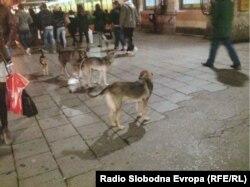 Psi u glavnoj sarajevskoj ulici, januar 2012. foto: Milenko Voćkić