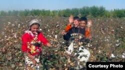 Мақта теріп жүрген балалар. Өзбекстан, 21 қазан 2012 жыл.