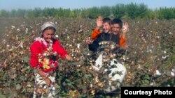 Мақта теріп жүрген балалар. Қашқадария облысы, Өзбекстан, 21 қазан 2012 жыл.
