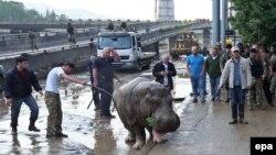 Покрытая слоем грязи площадь Героев в Тбилиси, по которой брели сумевшие спастись от стихии люди и животные из местного зоопарка, теперь станет еще и памятным местом этой трагедии