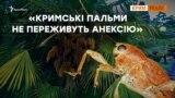 Російські шкідники з'їдають кримські пальми | Крим.Реалії