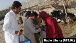 په بلوچستان کې د ګوزڼ کارکوونکي.