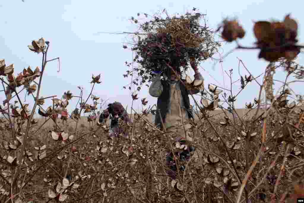 Afghan men collect dried plants to be used as firewood on the outskirts of Mazar-e Sharif. (AFP/Sayed Mustafa)