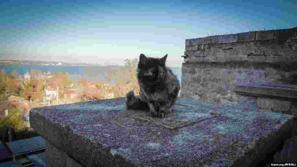 Навершия каменных пролетов, где ранее красовались скульптуры грифонов, облюбовали бродячие коты. Животные греются на солнце и осматривают окрестности с высоты. Керчь, Митридатская лестница.